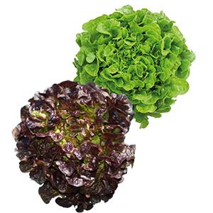 salade yvelines